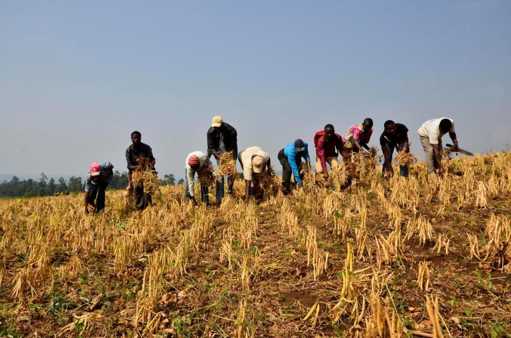 Jordbruk i DR Kongo (foto: Neil Palmer/CIAT)