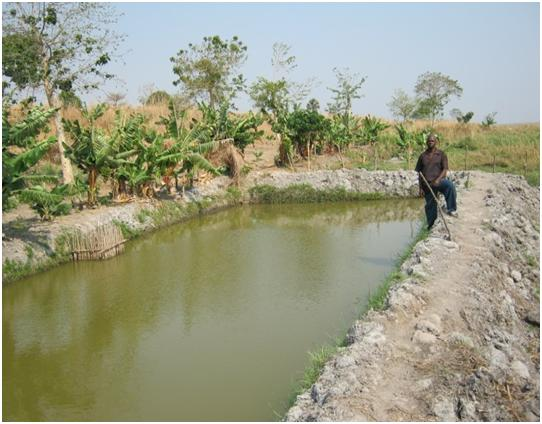 Stabin Katebe fish pond 3